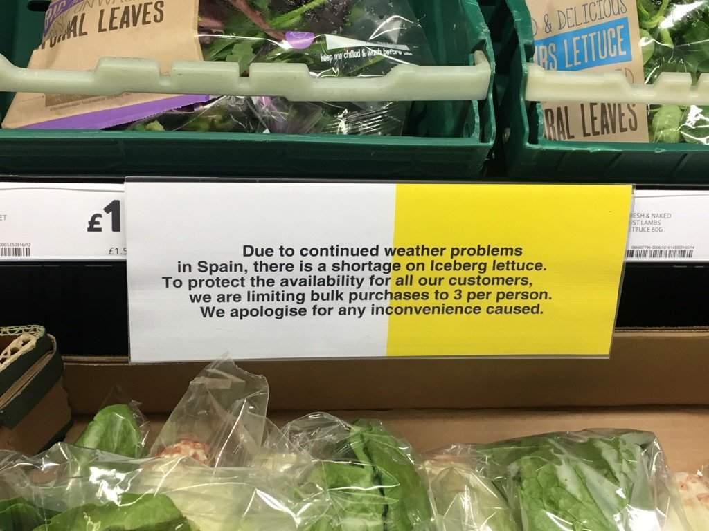 UK supermarkets hit tip of the iceberg as lettuce shortage escalates