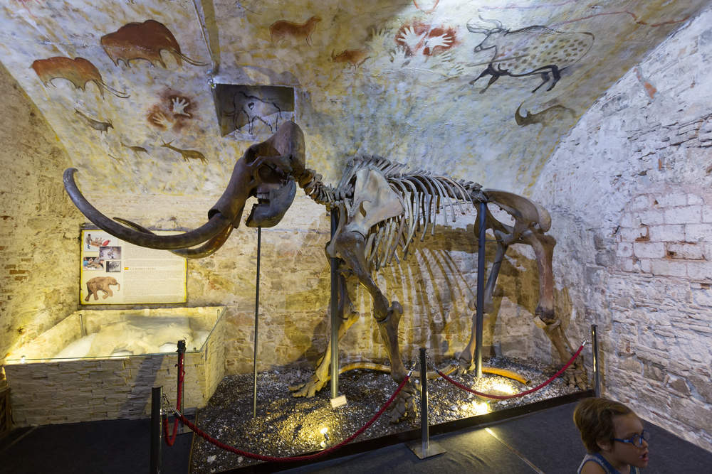 A woolly mammoth skeleton is expected to fetch $550,000 next month in France