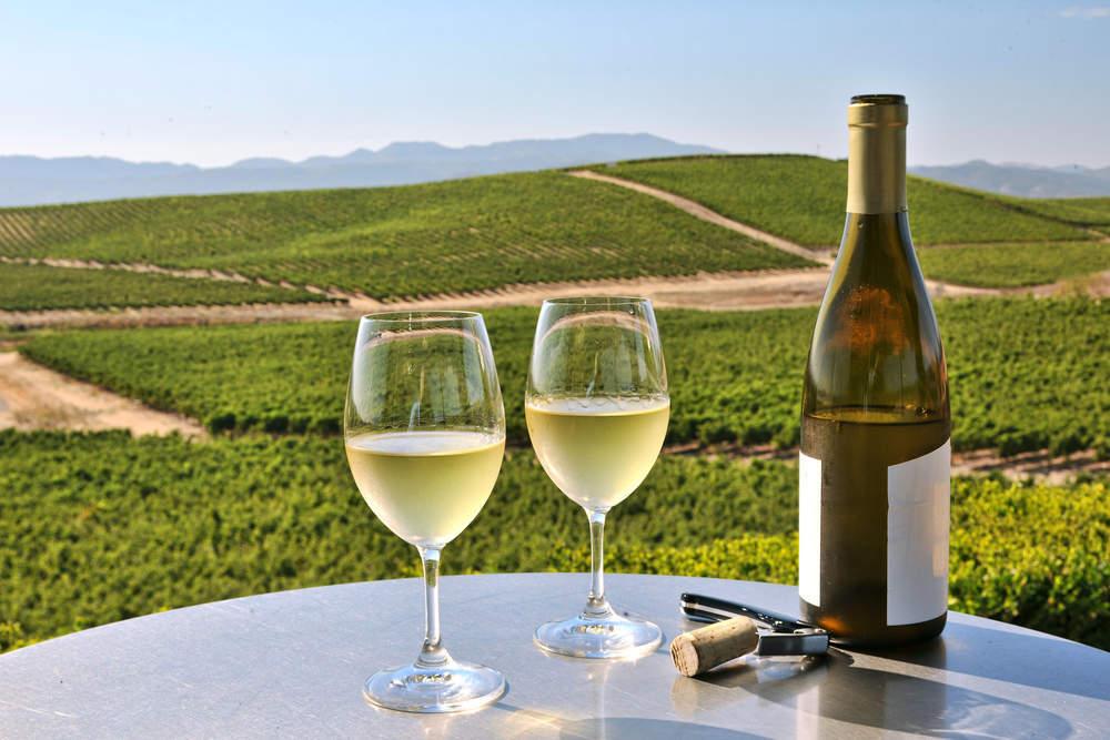 Live in the Vineyard - Verdict