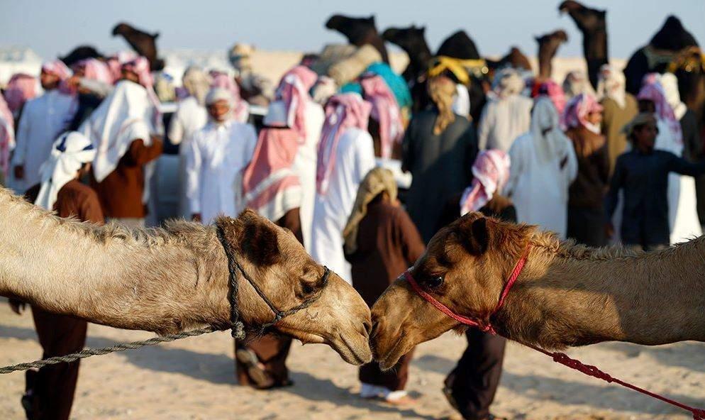 Al Dhafra Festival - Verdict