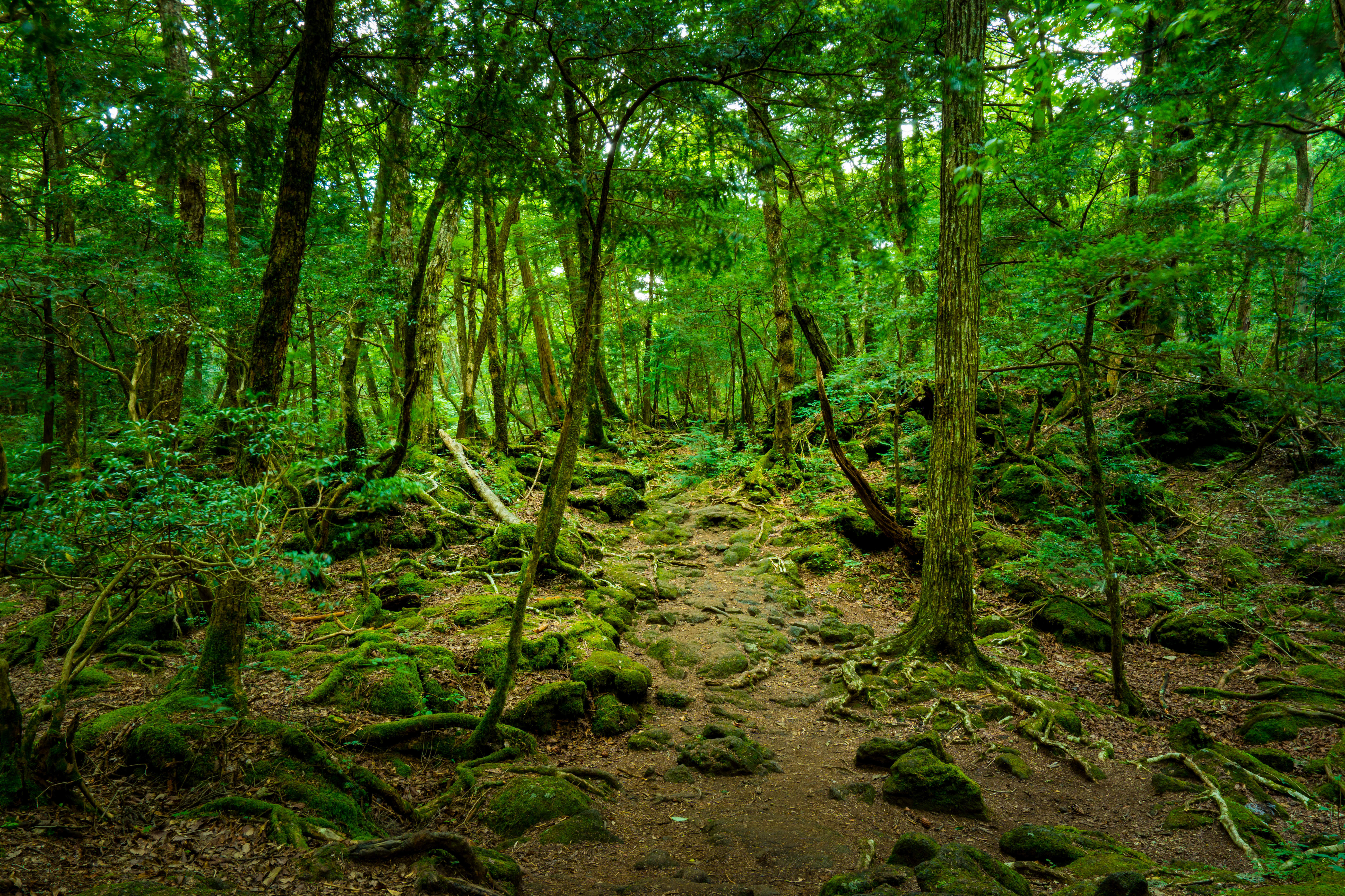 What is the Aokigahara forest in Japan and can you visit it?