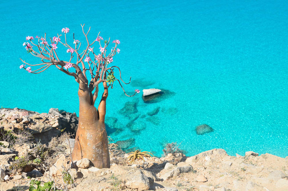 The UAE appears to be building a Dubai-style resort on Yemen's island of Socotra