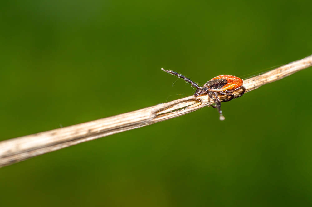 Tick-borne diseases on the rise: what can be done?
