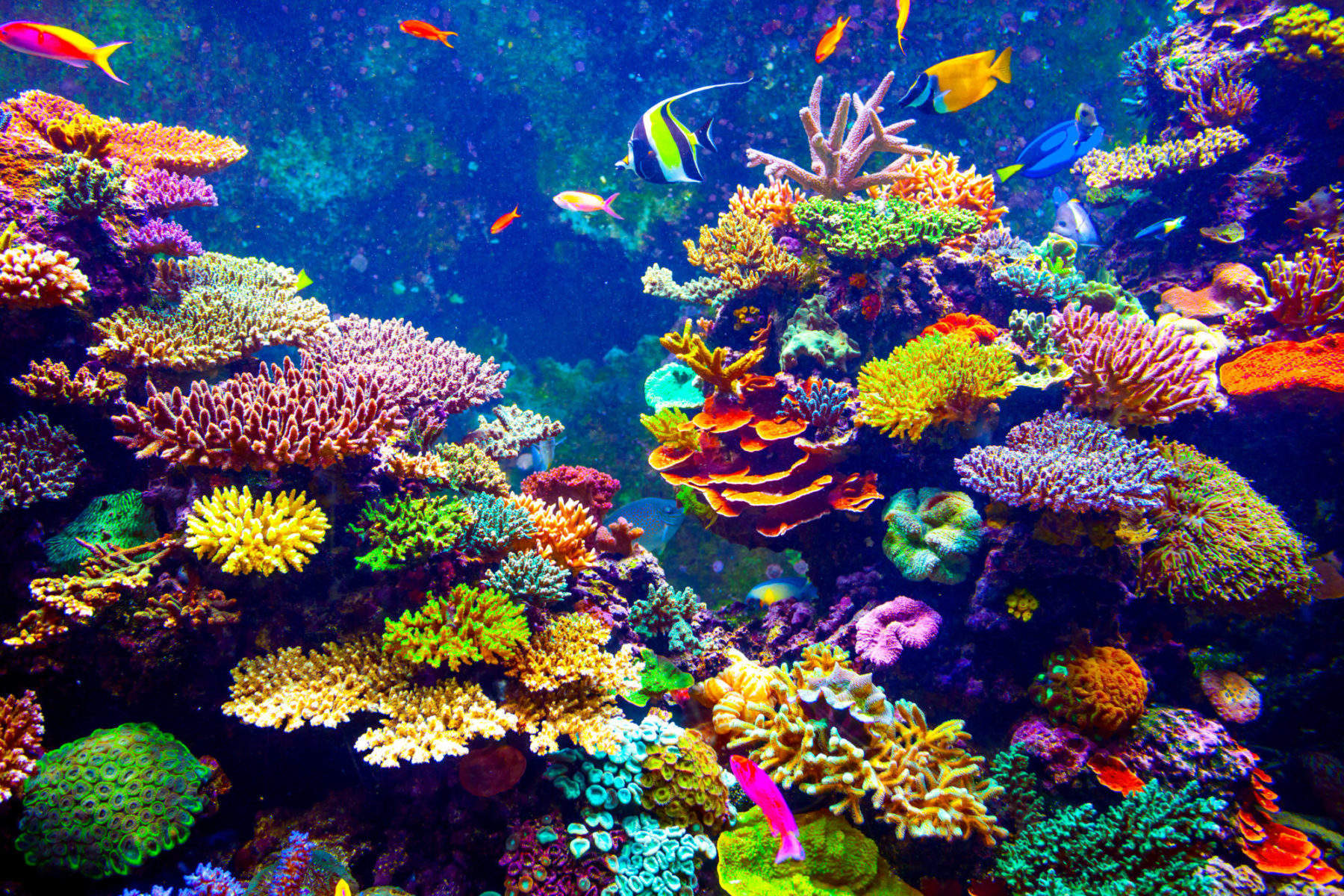 This 3D printed reef could help save the ocean