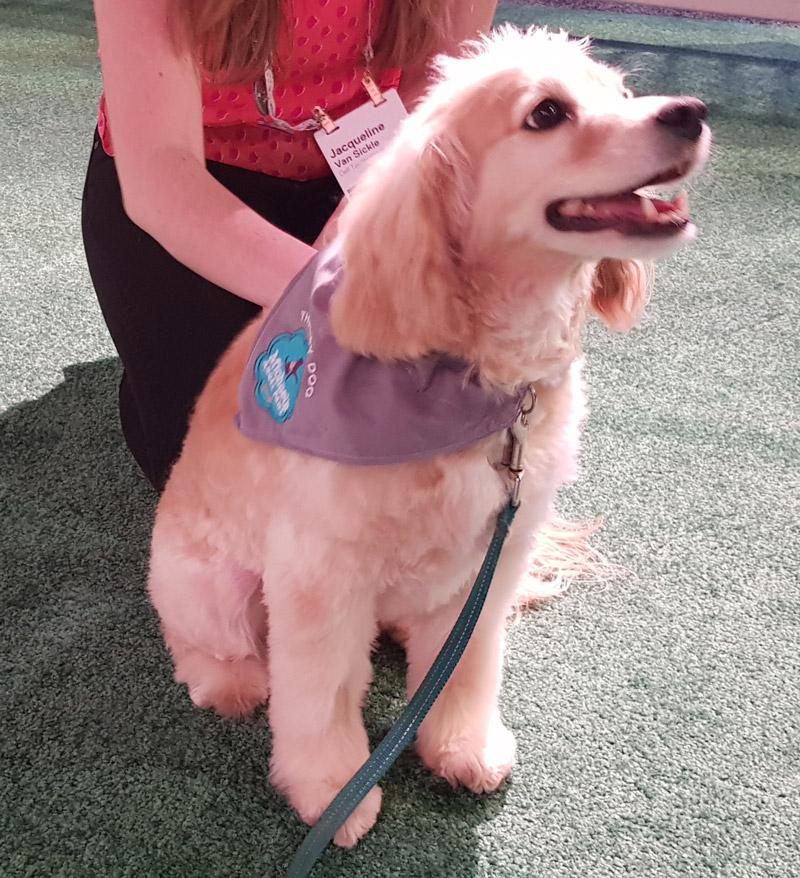 Dell Technologies World: dog
