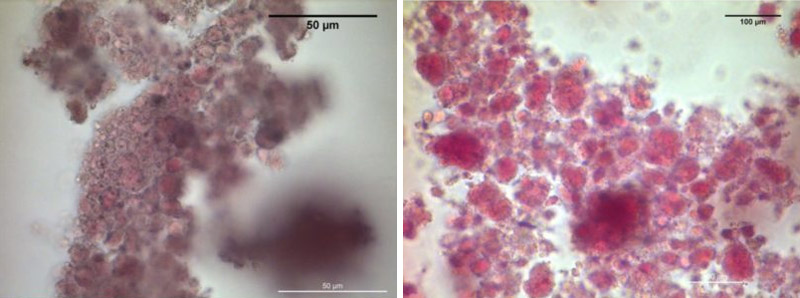 milk sensor nanoparticles