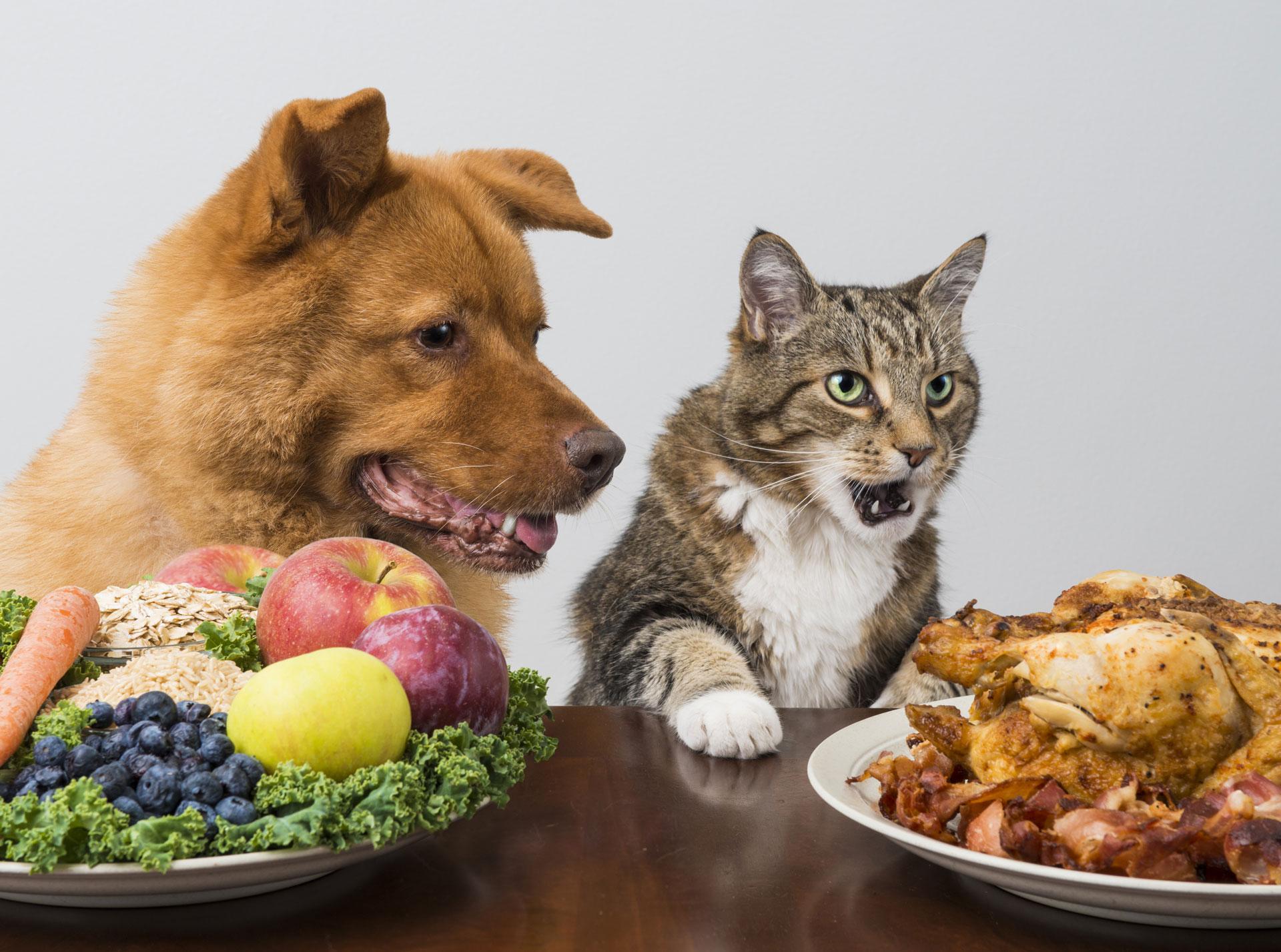 vegan pet food