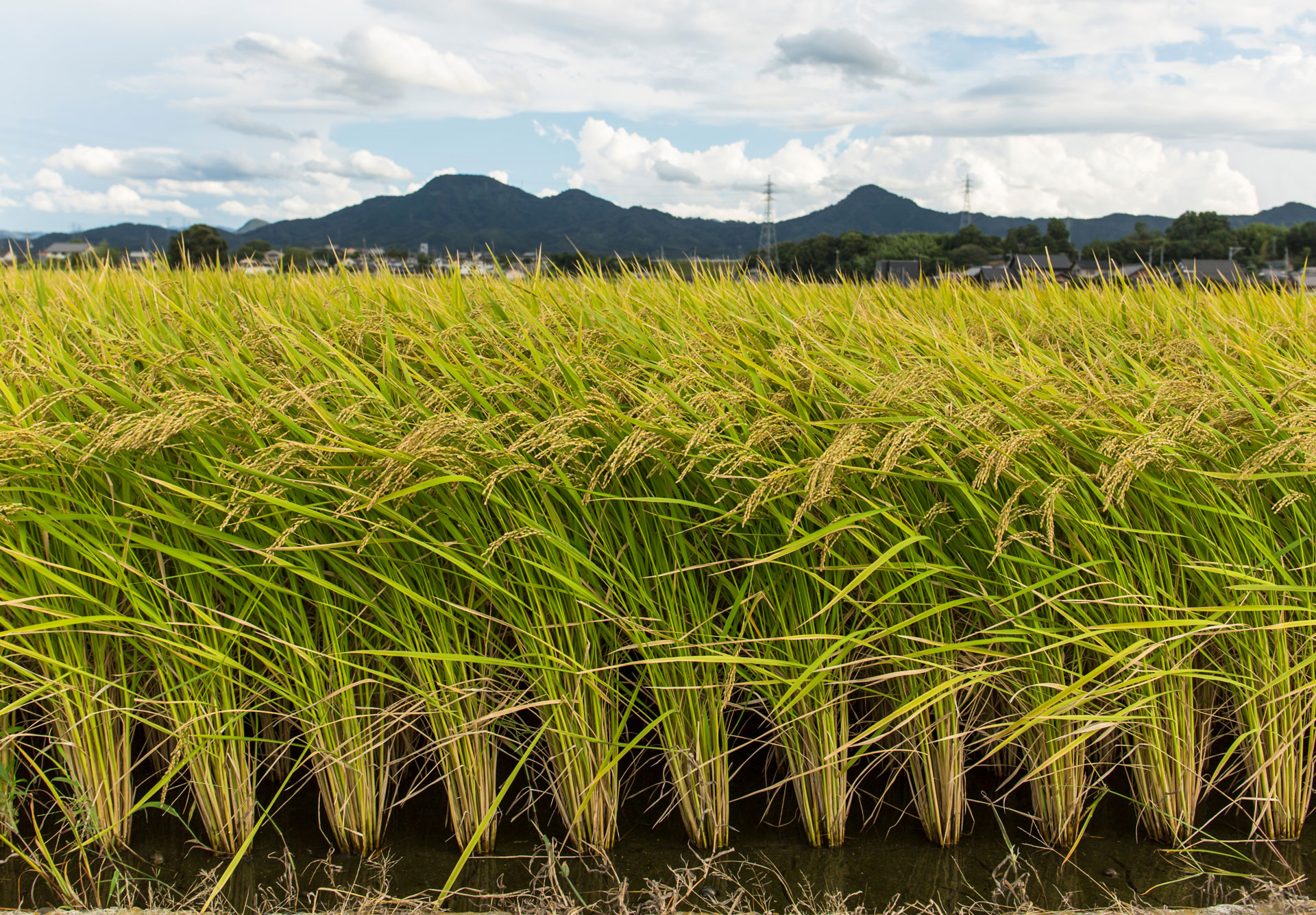 Plant DNA editing breakthrough vital to future food supply