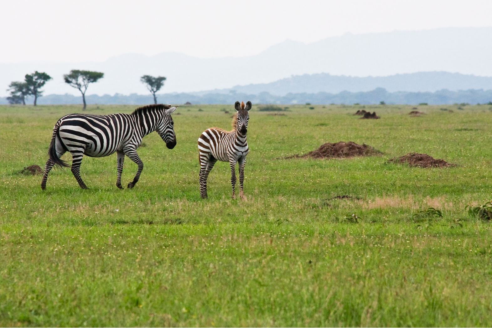 TrailGuard AI: AI-powered cameras deployed to protect against poachers