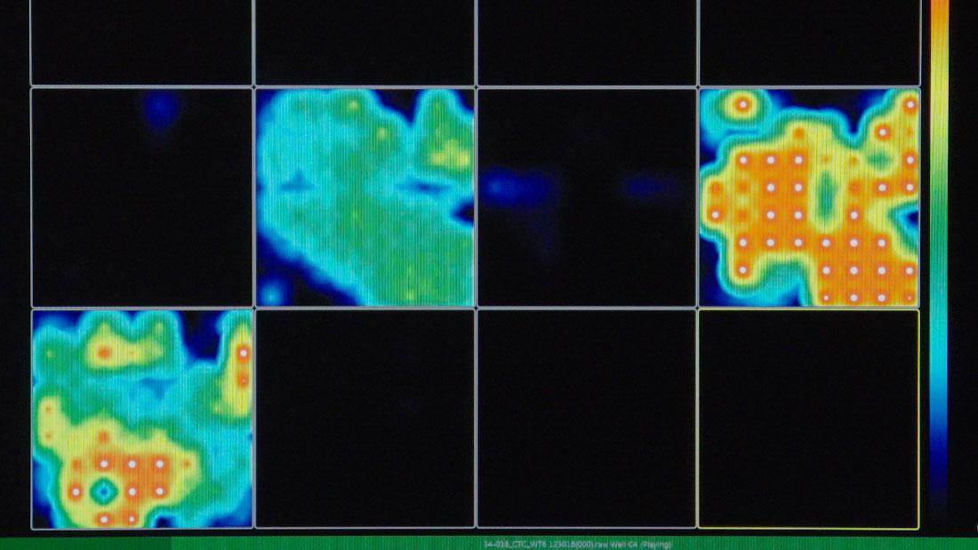 mini-brains brain waves
