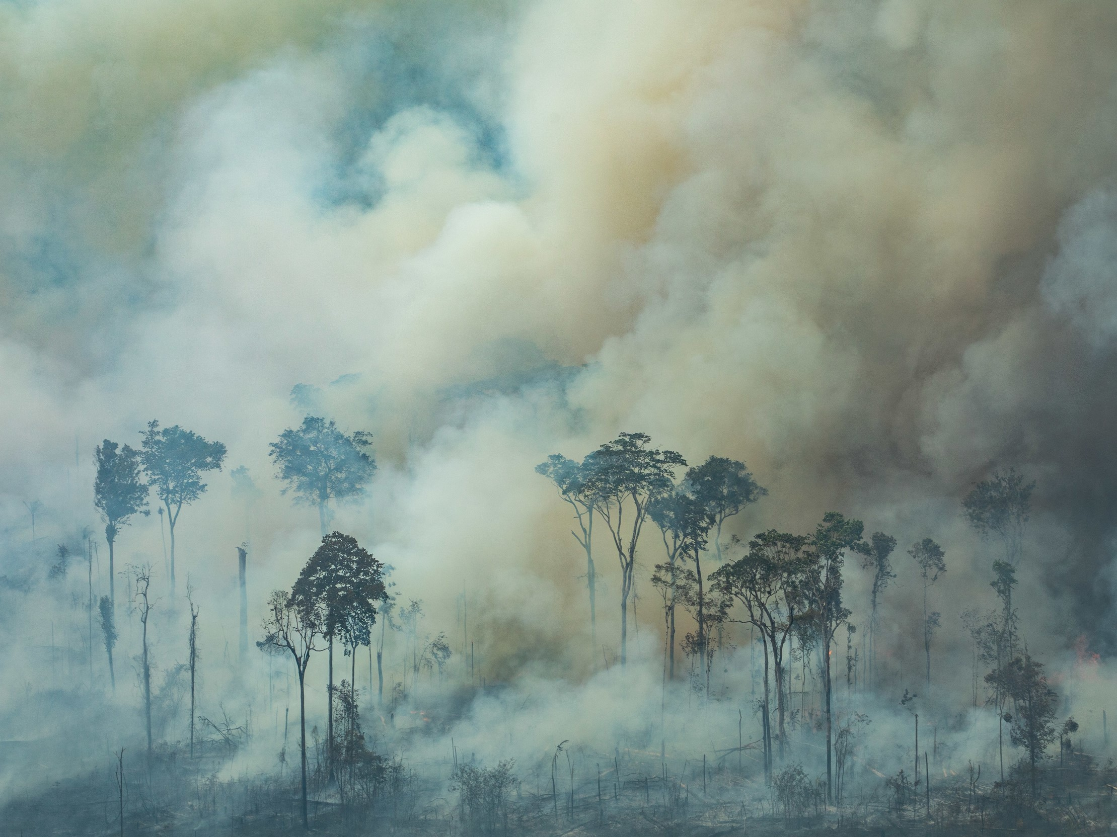 Have you heard the Amazon is on fire? The power of social media in awareness raising