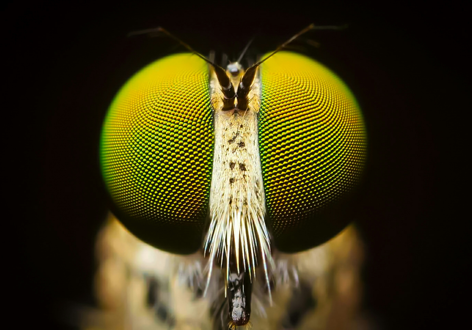 Insect-inspired silicon brain startup Opteran secures £2.1m funding