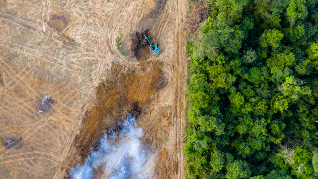 Rainforest Connection and Hitachi use AI to predict illegal logging