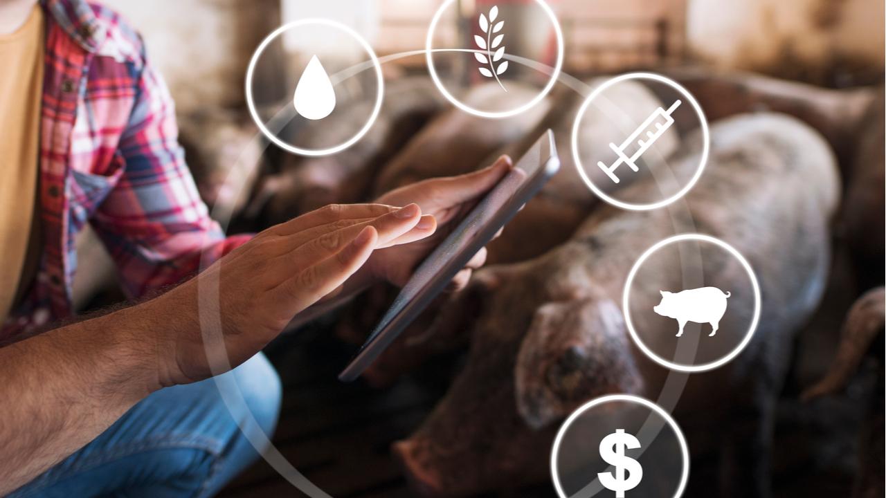 Huawei turns to pig farming tech as smartphone segment struggles