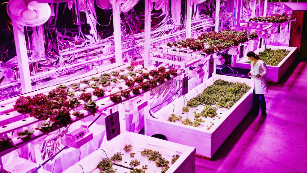 Indoor farming and the prospects for profitability