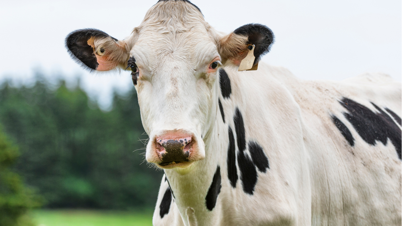 Russia fines Google 14 cattle for violating data law